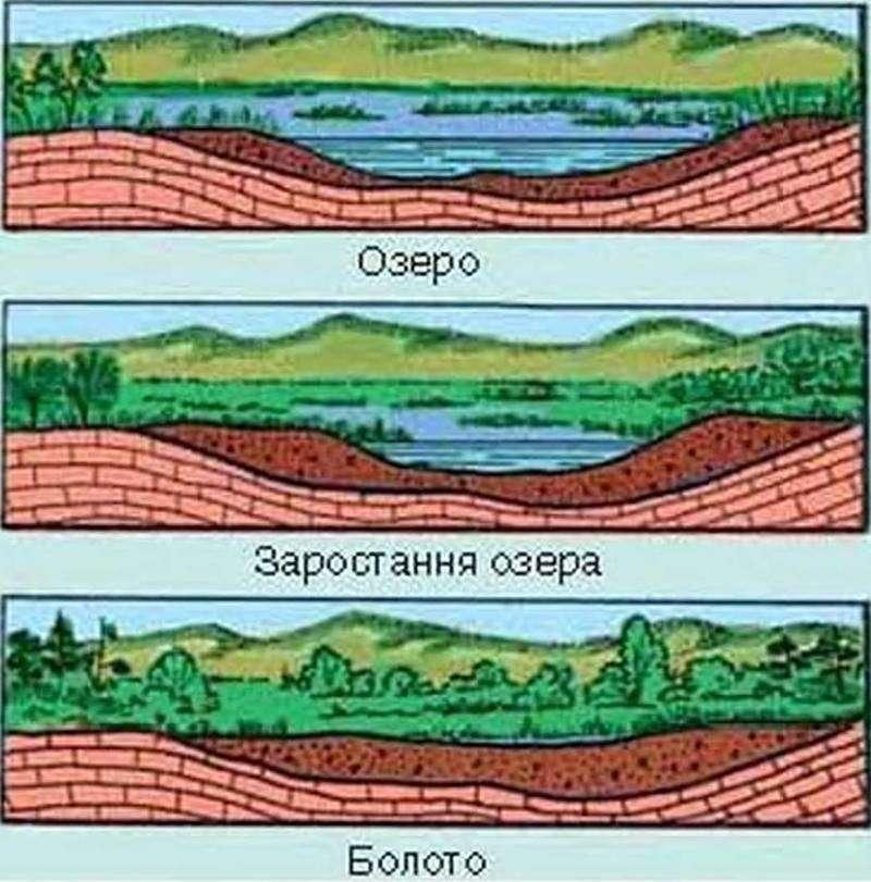 болота и их геологическая роль лучше